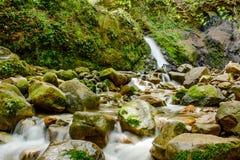 Привлекательный водопад и зеленый камень мха в лесе Стоковая Фотография RF