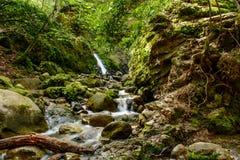 Привлекательный водопад и зеленый камень мха в лесе Стоковые Изображения