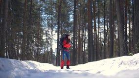 Привлекательный туристский пеший туризм в женщине леса активной во время похода в лесе зимы сгребая изображения движение медленно сток-видео