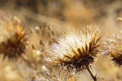 Привлекательный цветок на саде на одном горячем лете Стоковое Изображение