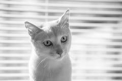 Привлеките животных интереса ` s природы Стоковая Фотография RF