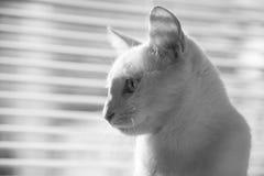 Привлеките животных интереса ` s природы Стоковые Фото