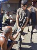 Пригвождать ноги лошади Farrier Стоковая Фотография