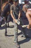 Пригвождать ноги лошади Farrier Стоковые Фотографии RF