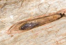 пригвоздите старое ржавое Конец-вверх стоковые изображения
