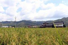 Пригородная жизнь в Японии Дома рядом с ricefield Стоковое фото RF