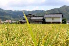 Пригородная жизнь в Японии Дома рядом с ricefield Pic был взятием Стоковые Изображения RF