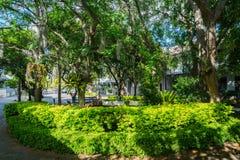Пригородный сад улицы Сиднея в густолиственном пригороде Стоковое Изображение RF