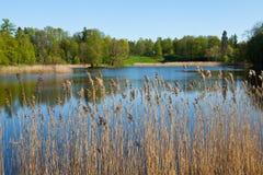 пригороды st petersburg парков садов Стоковые Изображения RF