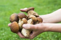 Пригорошня грибов porcini стоковые изображения rf