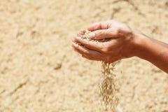 Пригорошня грубых unmilled зерен риса в человеческих руках стоковое фото rf
