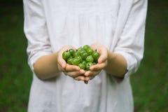 Пригорошня зрелого зеленого крыжовника леса в руках молодой женщины или девушки стоковые изображения