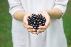 Пригорошня зрелой ежевики blackcurrant леса в руках молодой женщины или девушки стоковая фотография