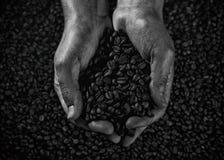 Пригорошня кофейных зерен черно-белых стоковое изображение