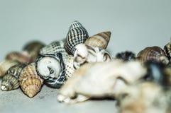Пригорошня красивых seashells собранных на песчаном пляже стоковое фото rf