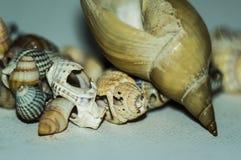 Пригорошня красивых seashells собранных на песчаном пляже стоковые изображения rf