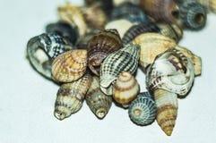 Пригорошня красивых seashells собранных на песчаном пляже стоковое фото