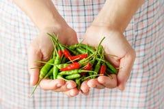 Пригорошня красных и зеленых перцев горячего chili в руках женщины стоковое изображение