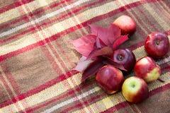 Пригорошня красных яблок и красного цвета выходит на коричневую шотландку Стоковые Фото