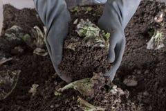 Пригорошня пахотноспособной почвы в руках ответственного фермера стоковая фотография rf