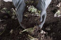 Пригорошня пахотноспособной почвы в руках ответственного фермера стоковое фото rf