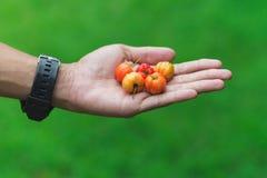 Пригорошня плодоовощей Концепция fruitarianism, сырцового foodism, подарка или заботы стоковые фотографии rf