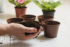 Пригорошня почвы в женской руке стоковая фотография rf