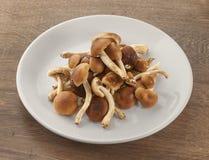Пригорошня пластинчатого гриба меда Стоковое Изображение