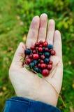 Пригорошня различных ягод от Финляндии стоковое изображение rf