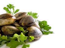 Пригорошня свежих clams смешанных с листьями петрушки стоковые фото