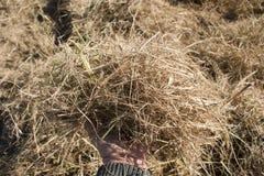 Пригорошня сена стоковые изображения