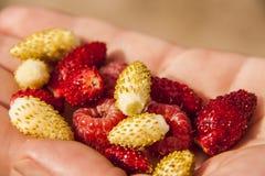Пригорошня ягод в руке стоковые изображения
