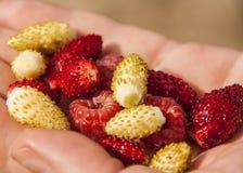 Пригорошня ягод в руке стоковое изображение
