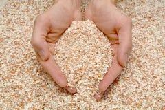 Пригорошня eggshell в мужских руках Стоковая Фотография