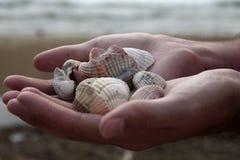 Пригорошня seashells стоковое изображение
