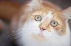 придавать правильную формуый кот Стоковое Изображение