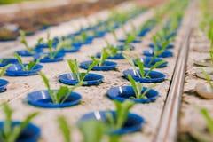 придает форму чашки овощ hydroponics пластичный малый Стоковые Фото