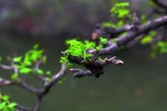 придено имеет весну Стоковое Изображение RF