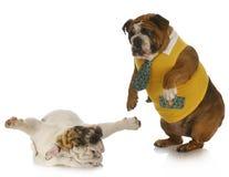 Придурковатые собаки Стоковое фото RF