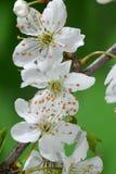 приезжает весна Стоковая Фотография RF