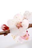 приезжает весна Стоковые Изображения