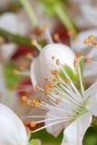 приезжает весна Стоковое фото RF