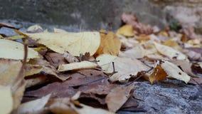 приезжанная осень имеет Стоковое фото RF