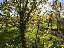 приезжано имеет весну Стоковое Фото