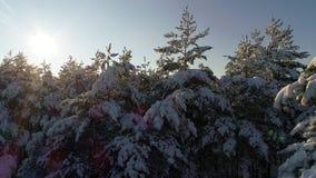 Приземляться в лес зимы сток-видео