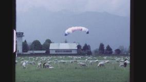 Приземляться между овцами сток-видео
