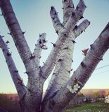 Признак жизни для близко уравновешенного дерева Стоковая Фотография RF