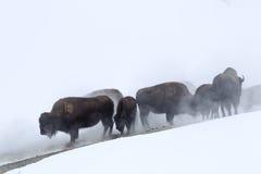 Призрак в тумане Стоковые Изображения RF