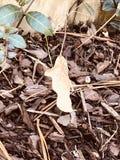 Призрак лист стоковое изображение