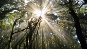 Призрак Brocken в туманном лесе Стоковая Фотография